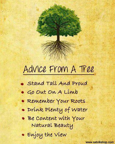 Advice-from-a-Tree-Earth